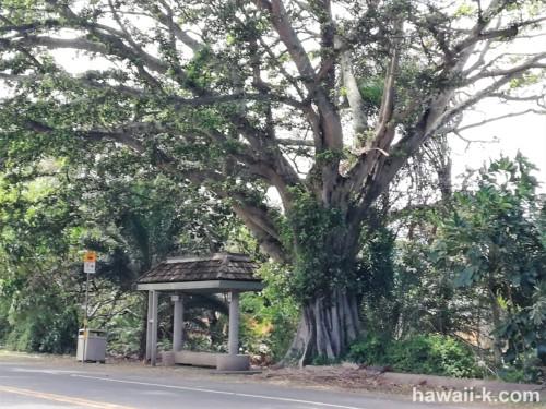 覆いかぶさる樹