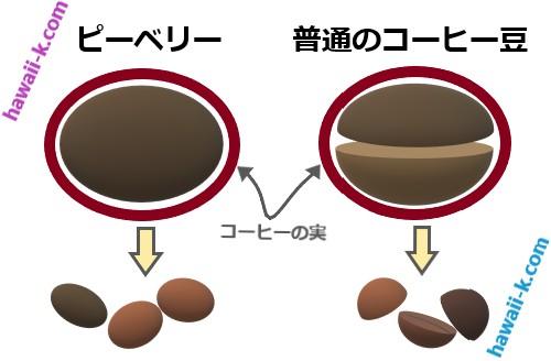 コーヒー豆 ピーベリー