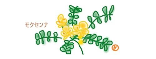 モクセンナの花