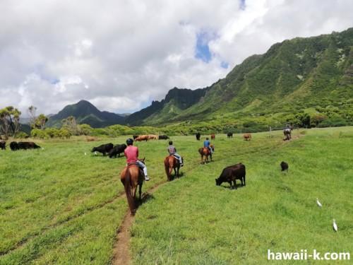 牧草地を進む
