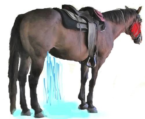 馬のマウイくん、用足し中