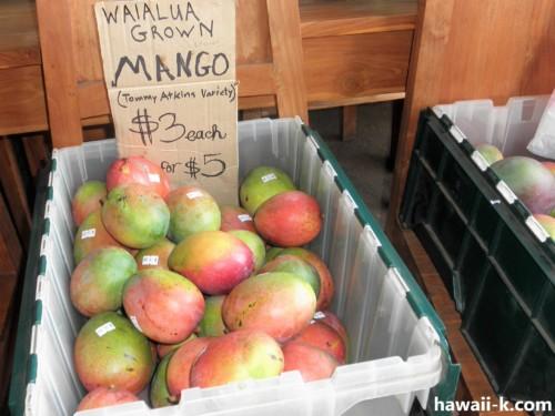 ワイアルアのマンゴー