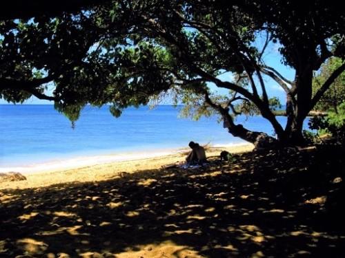 アリイビーチ木陰